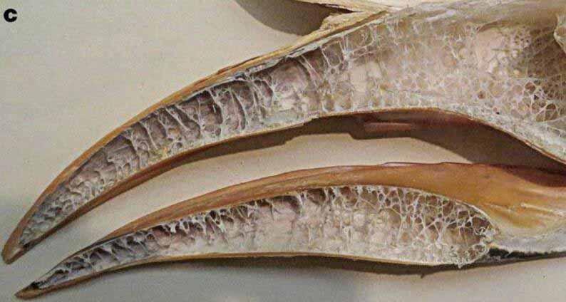 犀鸟的喙.jpg